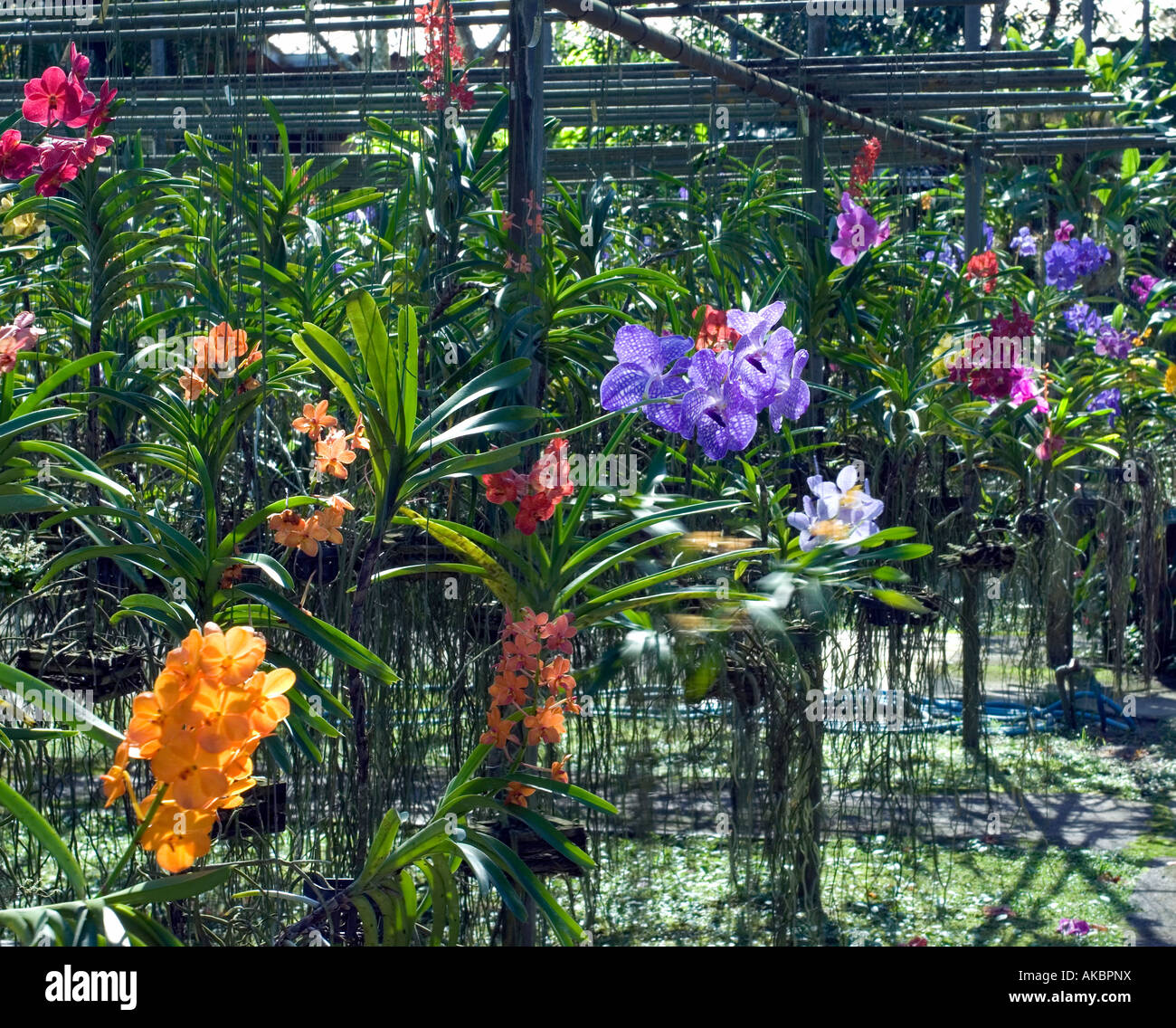 The well tended gardens of suanbua maesa orchid farm one - The well tended perennial garden ...