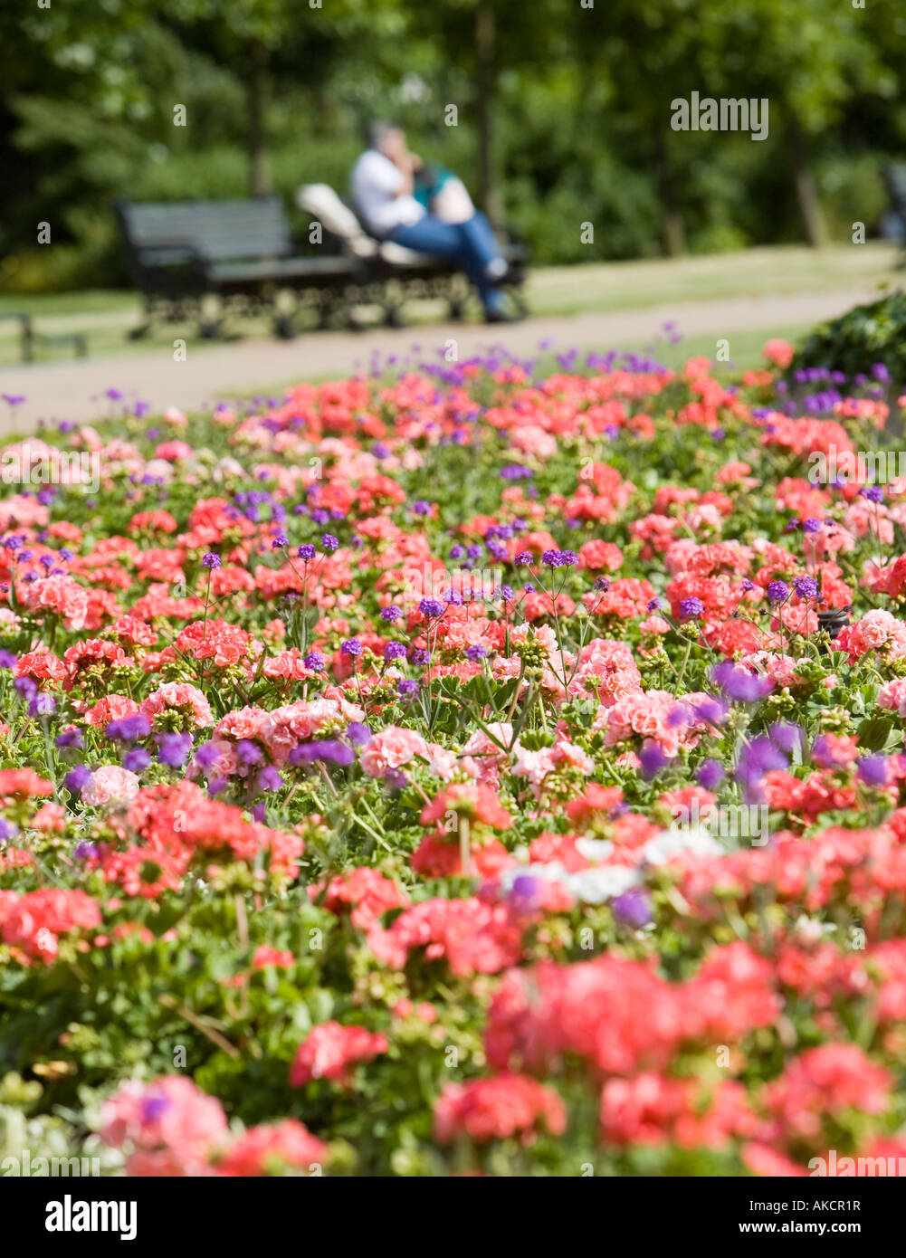 A colourful flower bed with a park bench in the background ... for Flower Park Background  150ifm