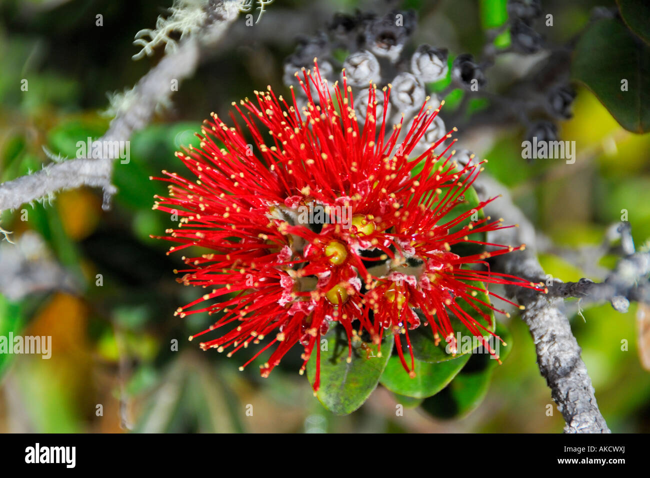 big beautiful flowers on a tree in the spring stock photo royalty