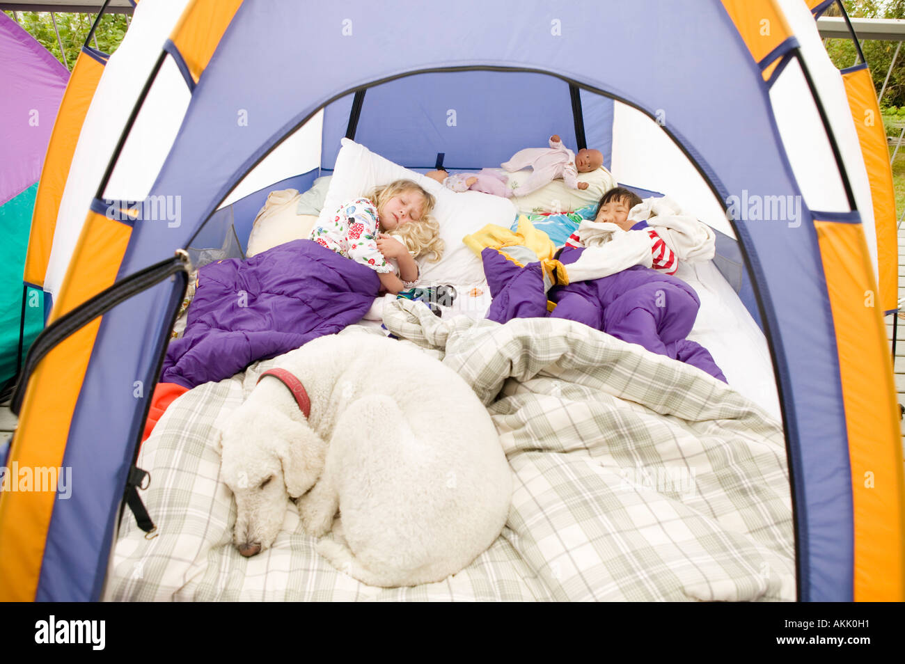 Young girls sleeping in tent with dog & Young girls sleeping in tent with dog Stock Photo: 8581904 - Alamy