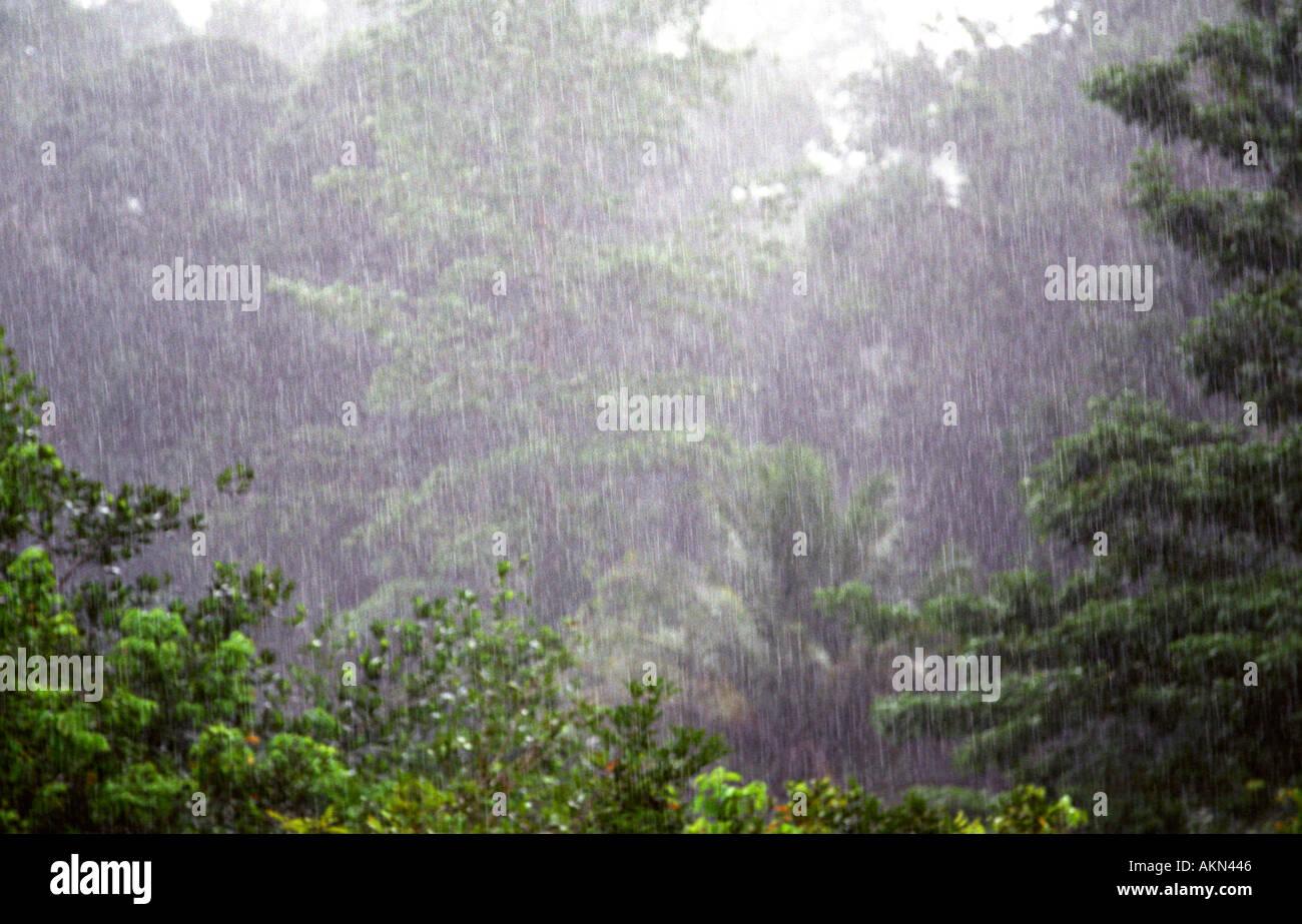 Rainfall in tropical rainforest sabah Borneo Stock Photo, Royalty ...
