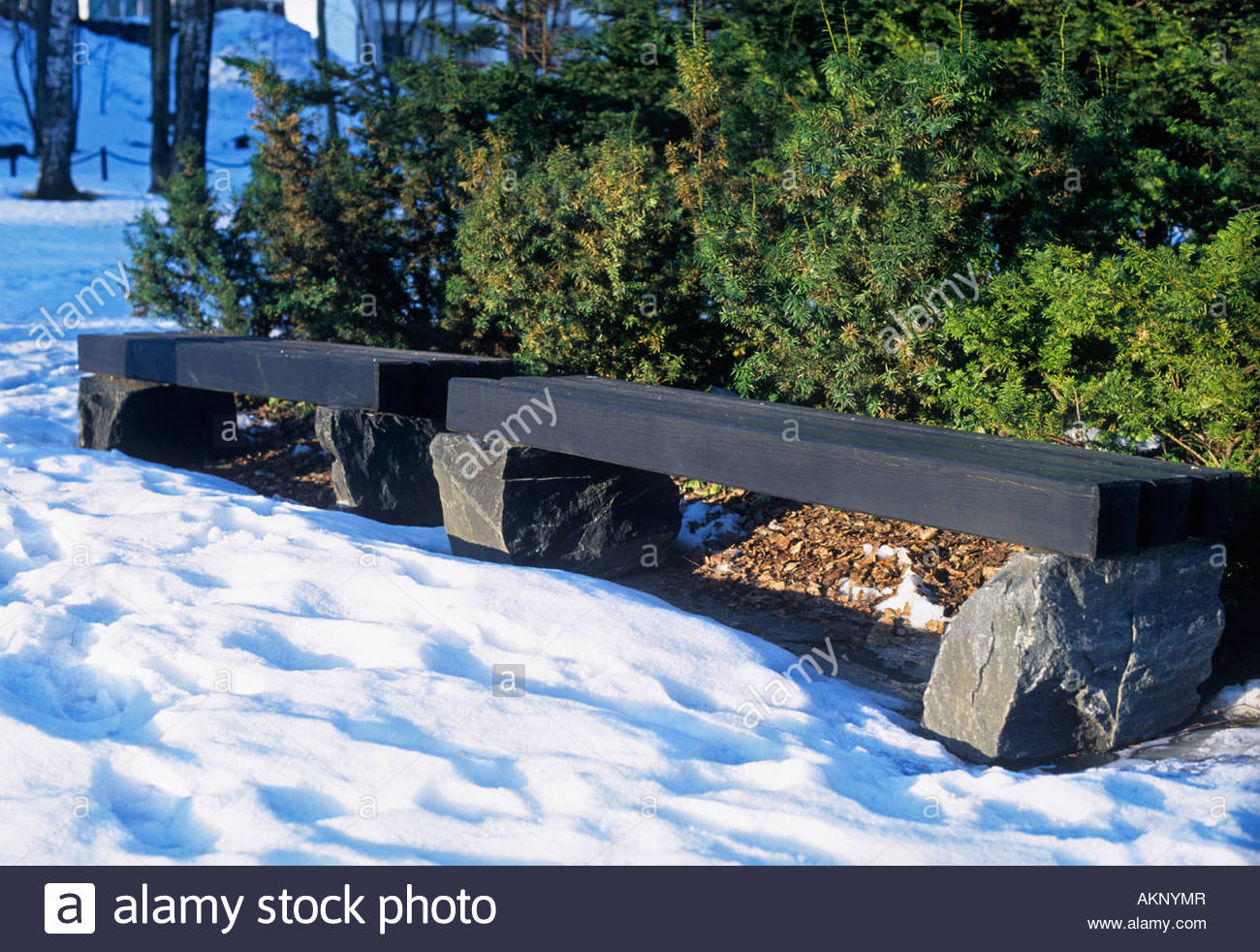 stone wood bench seats in park taxus sp yew evergreen hedging