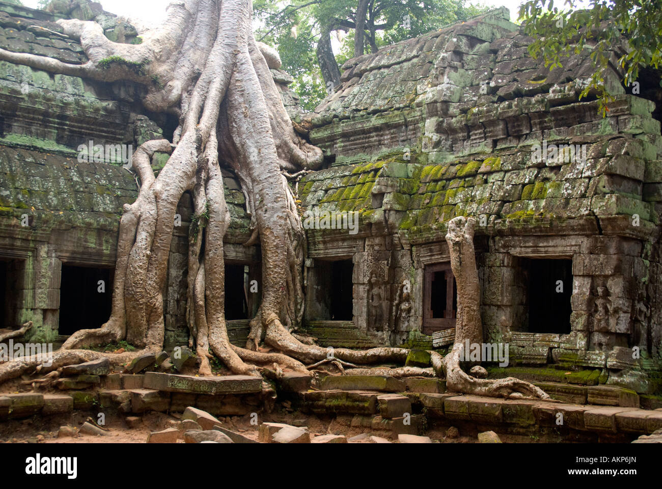 Ta Prohm Temple Ruins With Fig Tree Roots Growing On Wall Stock ...