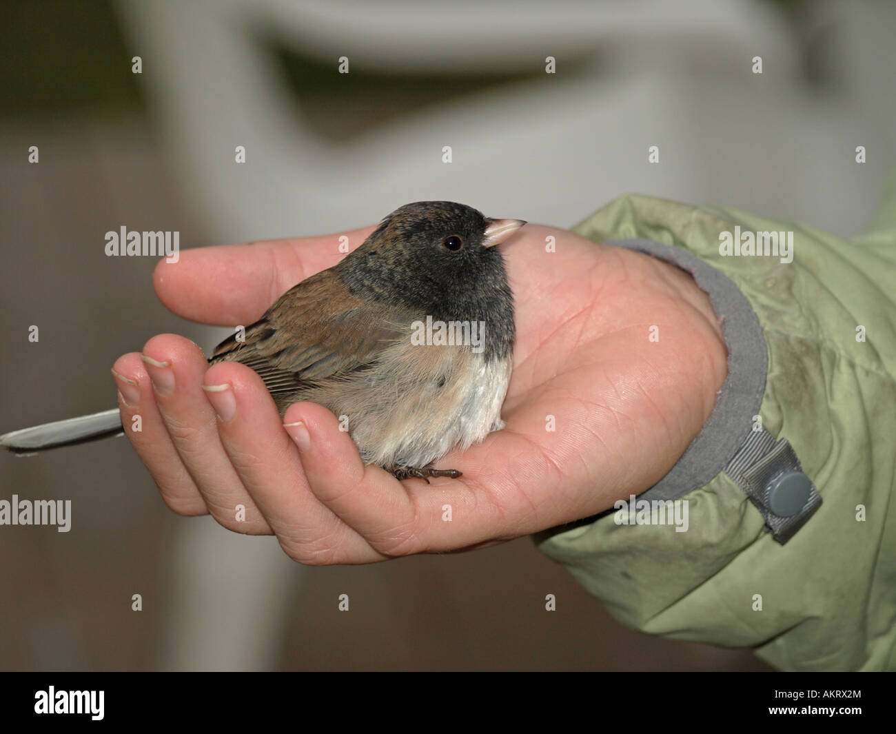 bird in the hand theory