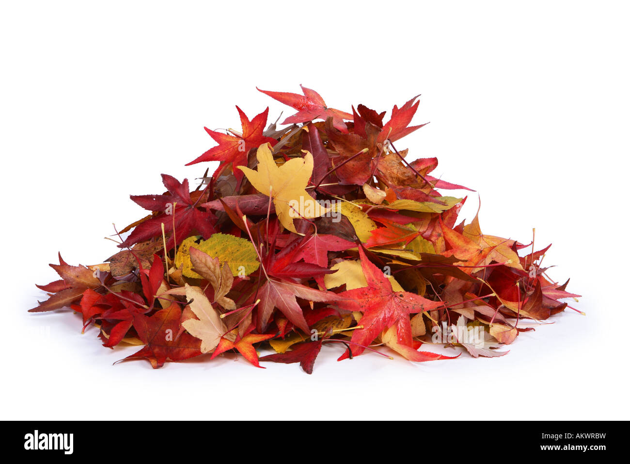 Pile of leaves cut out on white background Stock Photo ...