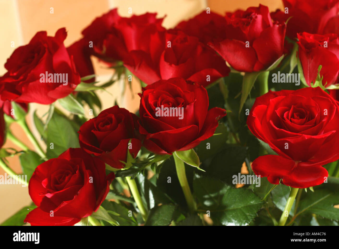 Bunch of red roses symbol of love stock photo 1330293 alamy bunch of red roses symbol of love buycottarizona