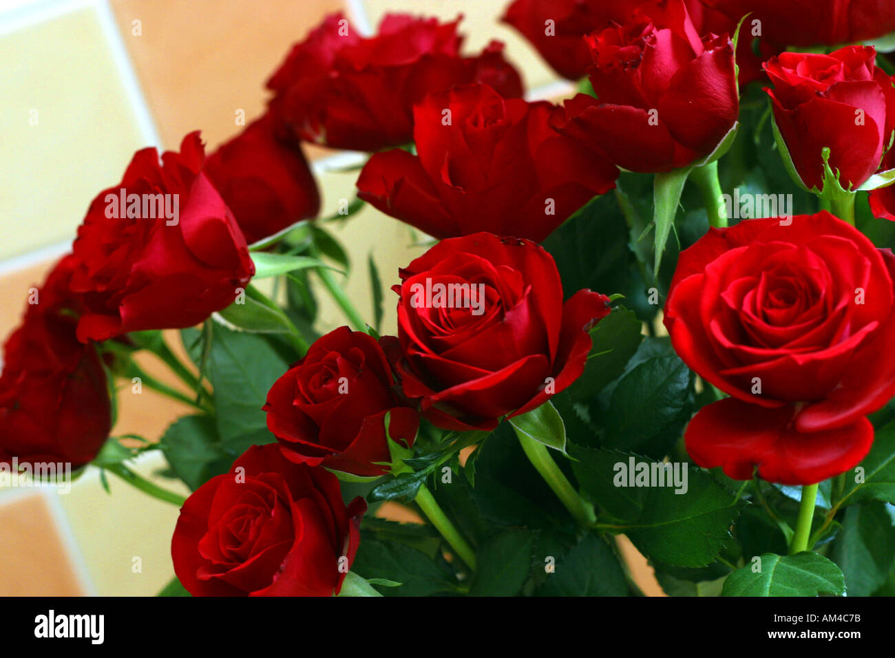 Bunch of red roses symbol of love stock photo royalty free image bunch of red roses symbol of love buycottarizona
