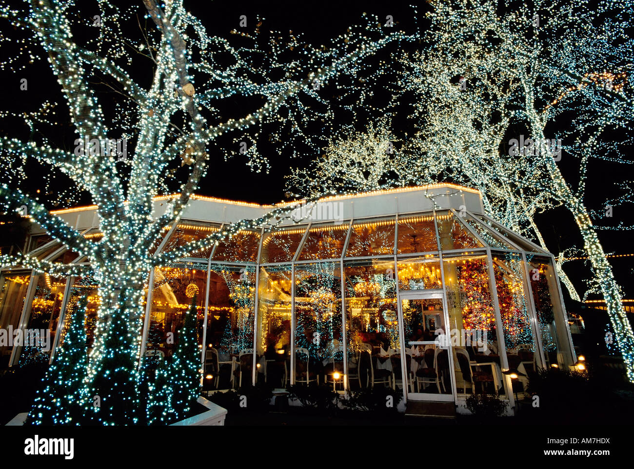 Illuminated trees in front of the traditional restaurant for Cuisine on the green