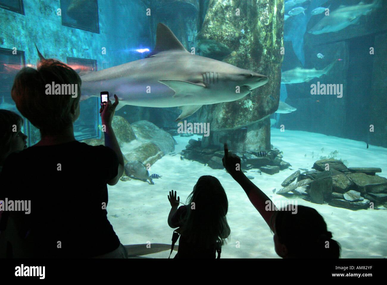 Buy fish for aquarium london - Stock Photo Visitors At The London Aquarium In London Uk