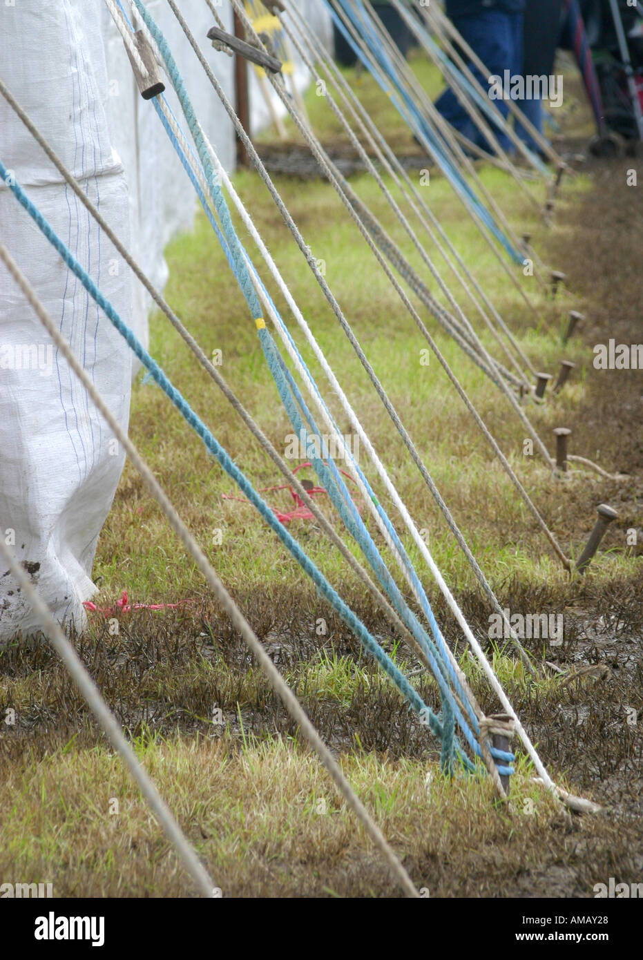 Row of guy ropes for traditional canvas tent or marquee & Row of guy ropes for traditional canvas tent or marquee Stock ...
