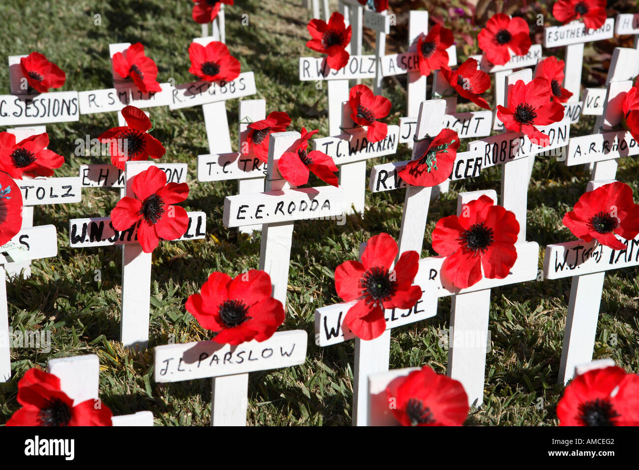 remembrance day poppies on white stock photos u0026 remembrance day