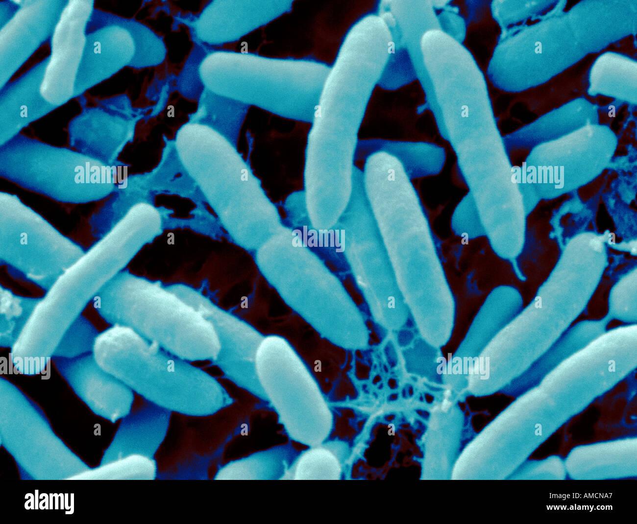 pseudomonas stock photos & pseudomonas stock images - alamy, Skeleton