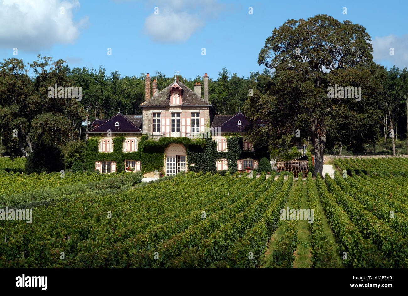 domaine d ardhuy winery and the monopole vineyard clos de langres in stock photo royalty free. Black Bedroom Furniture Sets. Home Design Ideas