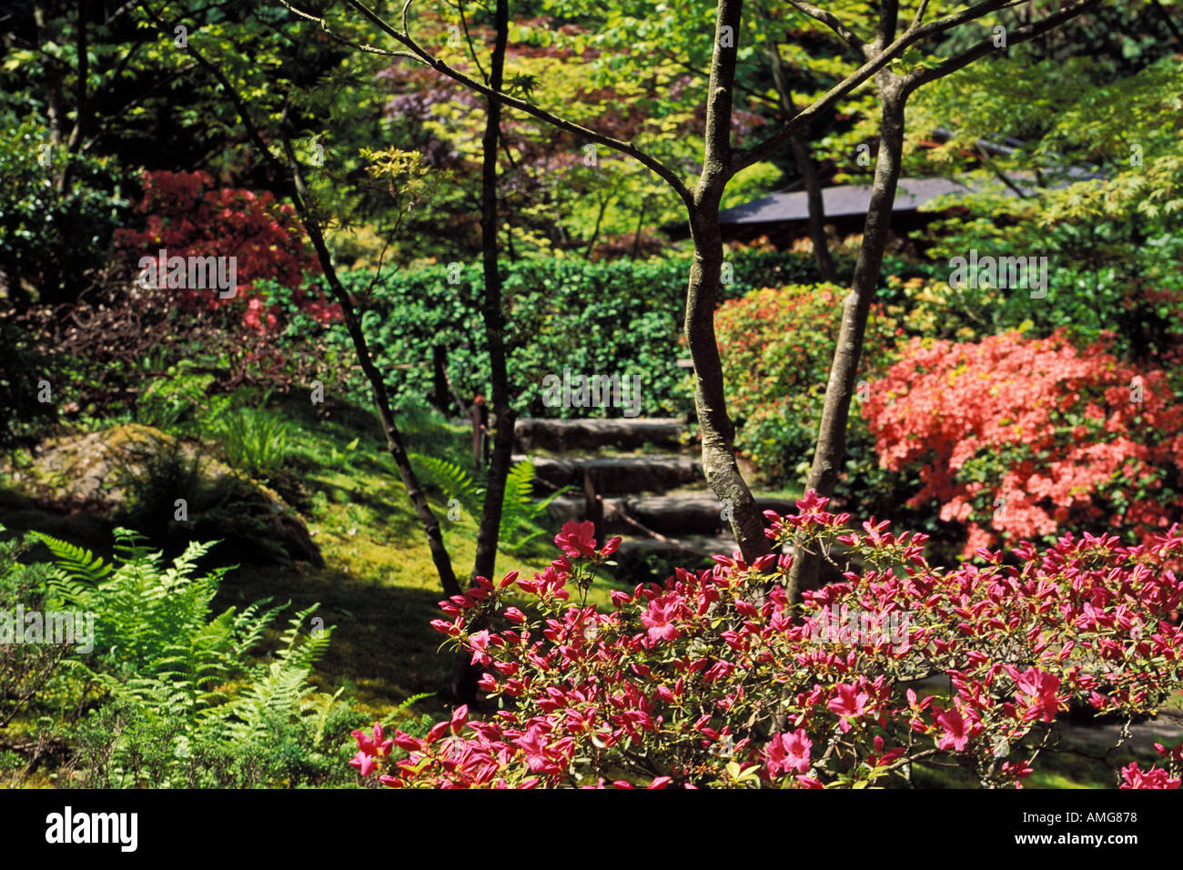 Japanese Garden At The University Of Washington Arboretum Seattle Washington
