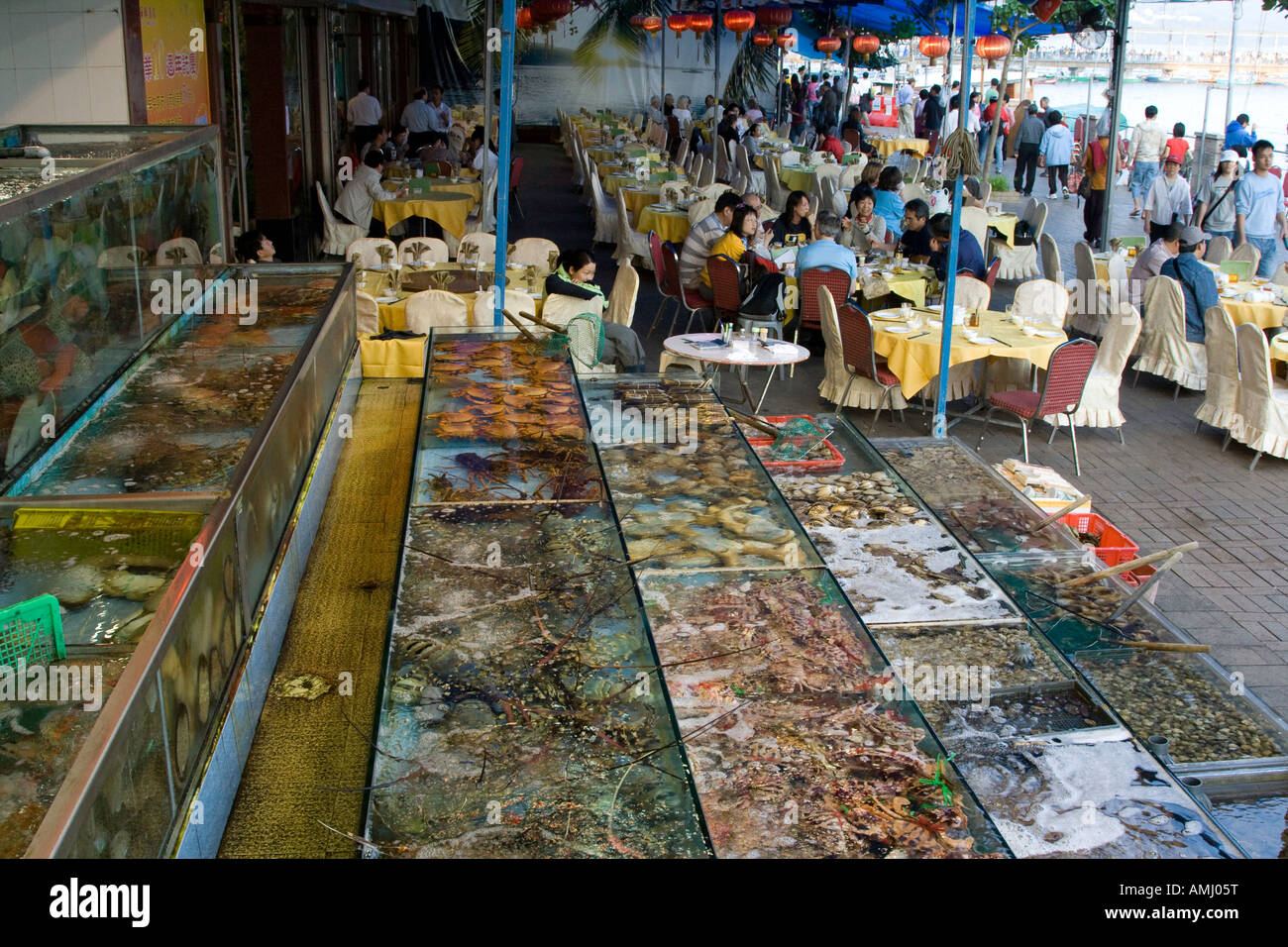 Live fish and shellfish in tanks at a chinese seafood for Oriental fish market