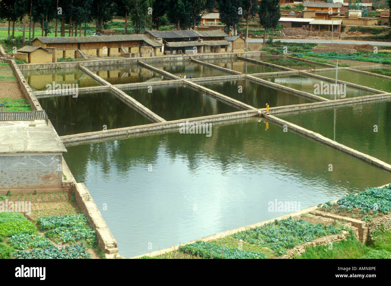 Aquaculture fish ponds in kunming people s republic of for Fish farming ponds