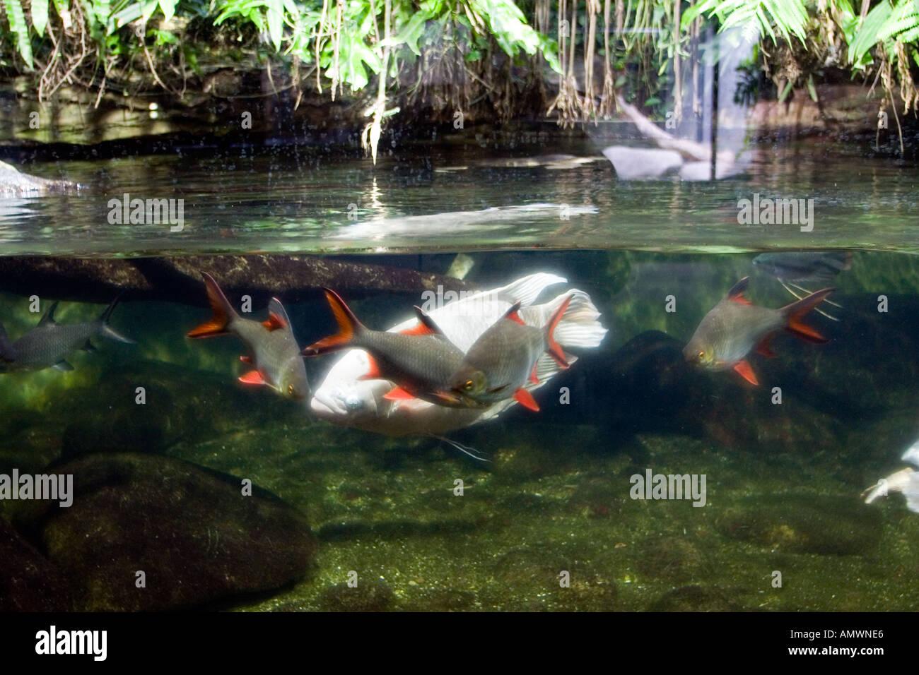 Germany baden wurttemberg stuttgart fish aquarium at for Aquarium botanic