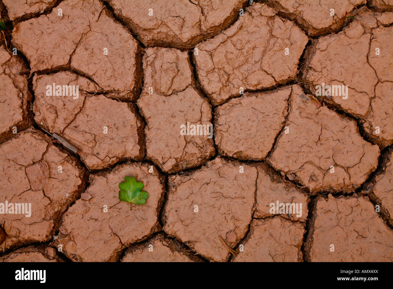 Single green leaf juxtaposed with arid, cracked, desert ...