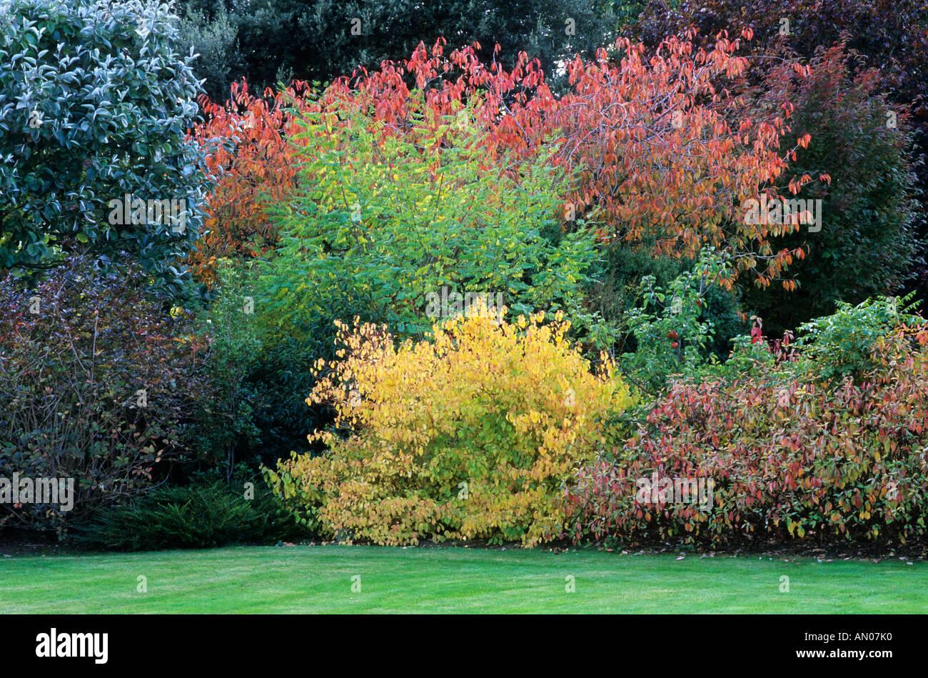 Autumn shrub border cornus alba 39 spaethii 39 cornus for Shrubs for garden borders