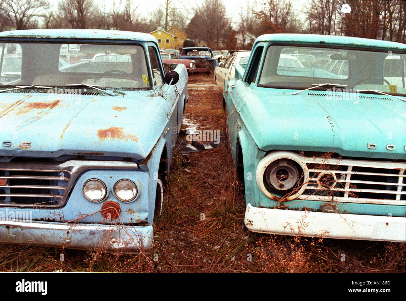 Junkyard with wrecked and junked cars Stock Photo, Royalty Free ...