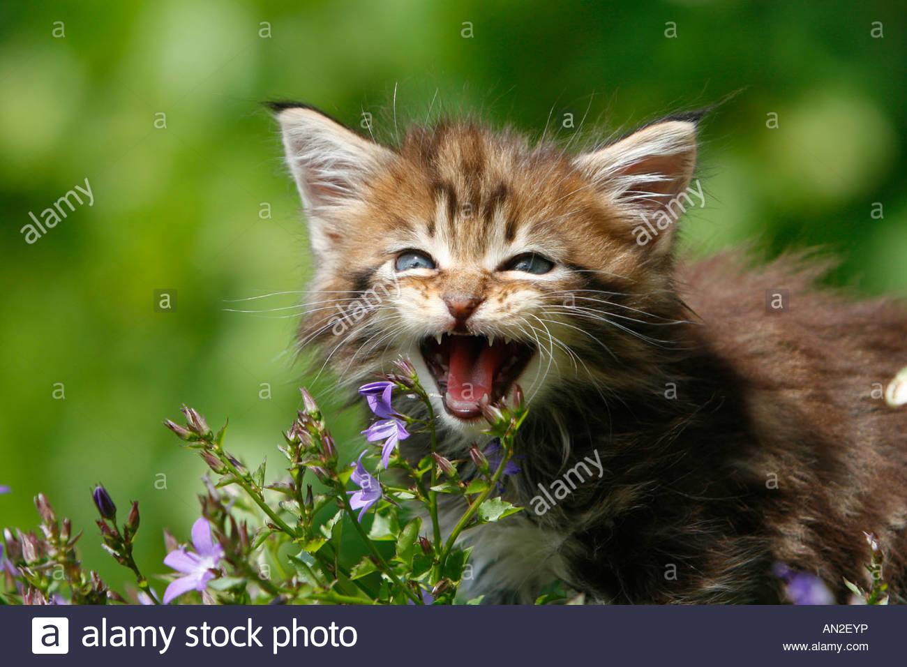 Cat Cute Funny Cup