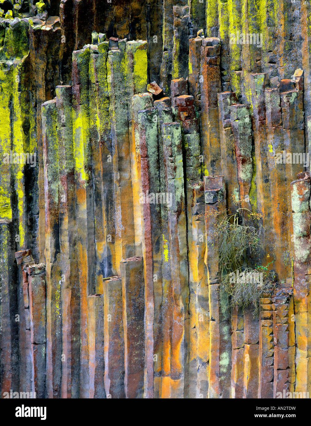 Basalt Stone Umpqua National Forest : Usa oregon umpqua national forest lichen covered