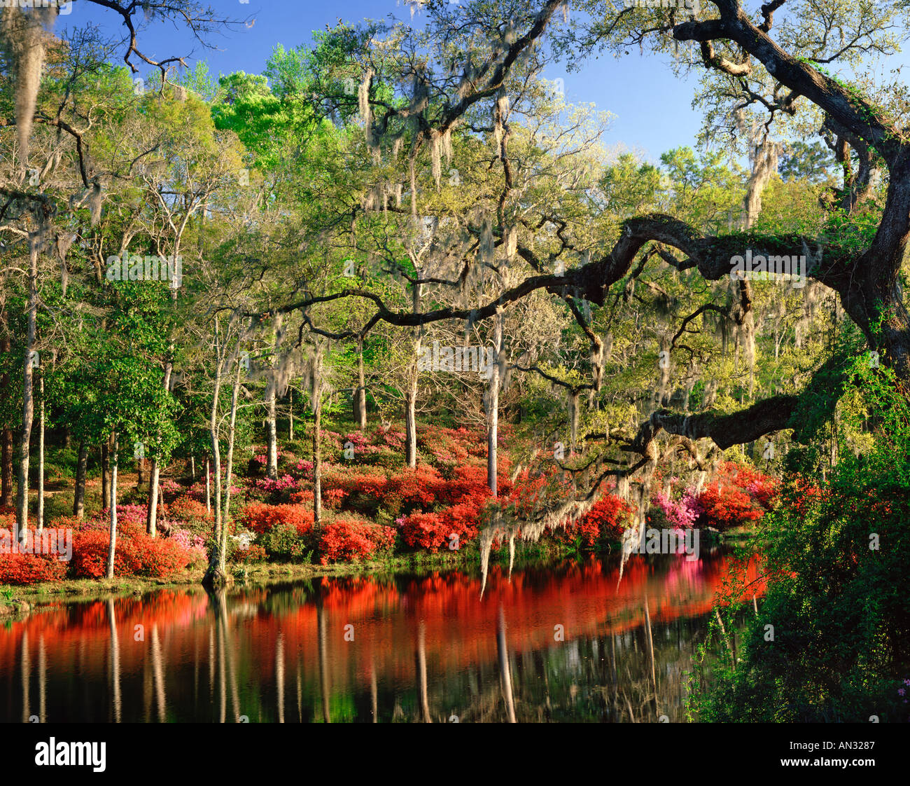Magnolia Gardens Near Charleston South Carolina Usa Stock Photo Royalty Free Image 1389190 Alamy