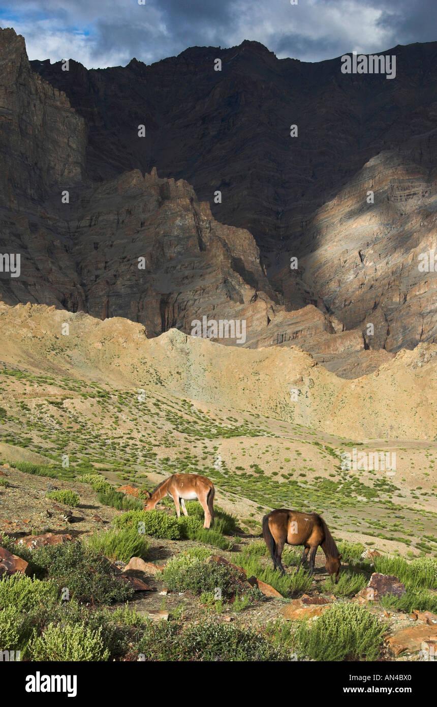 Watch 10 Himalayan Roads The Himalayas video