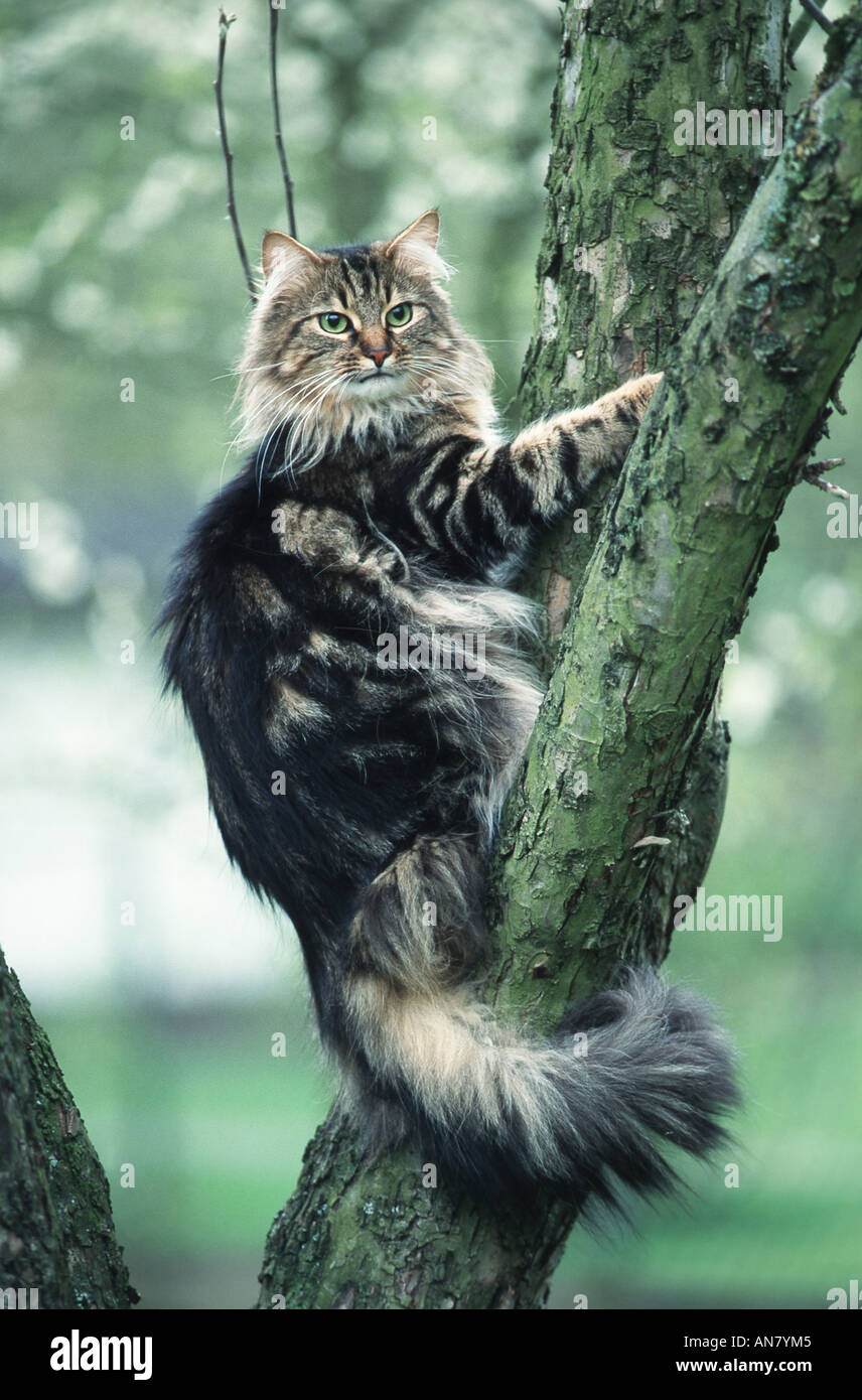domestic cat, house ca...