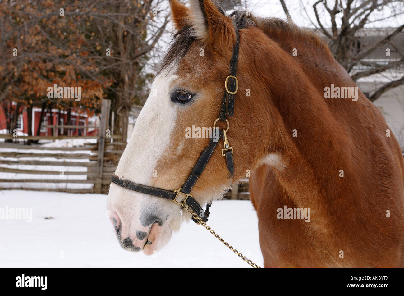 Black horse face close up - photo#52