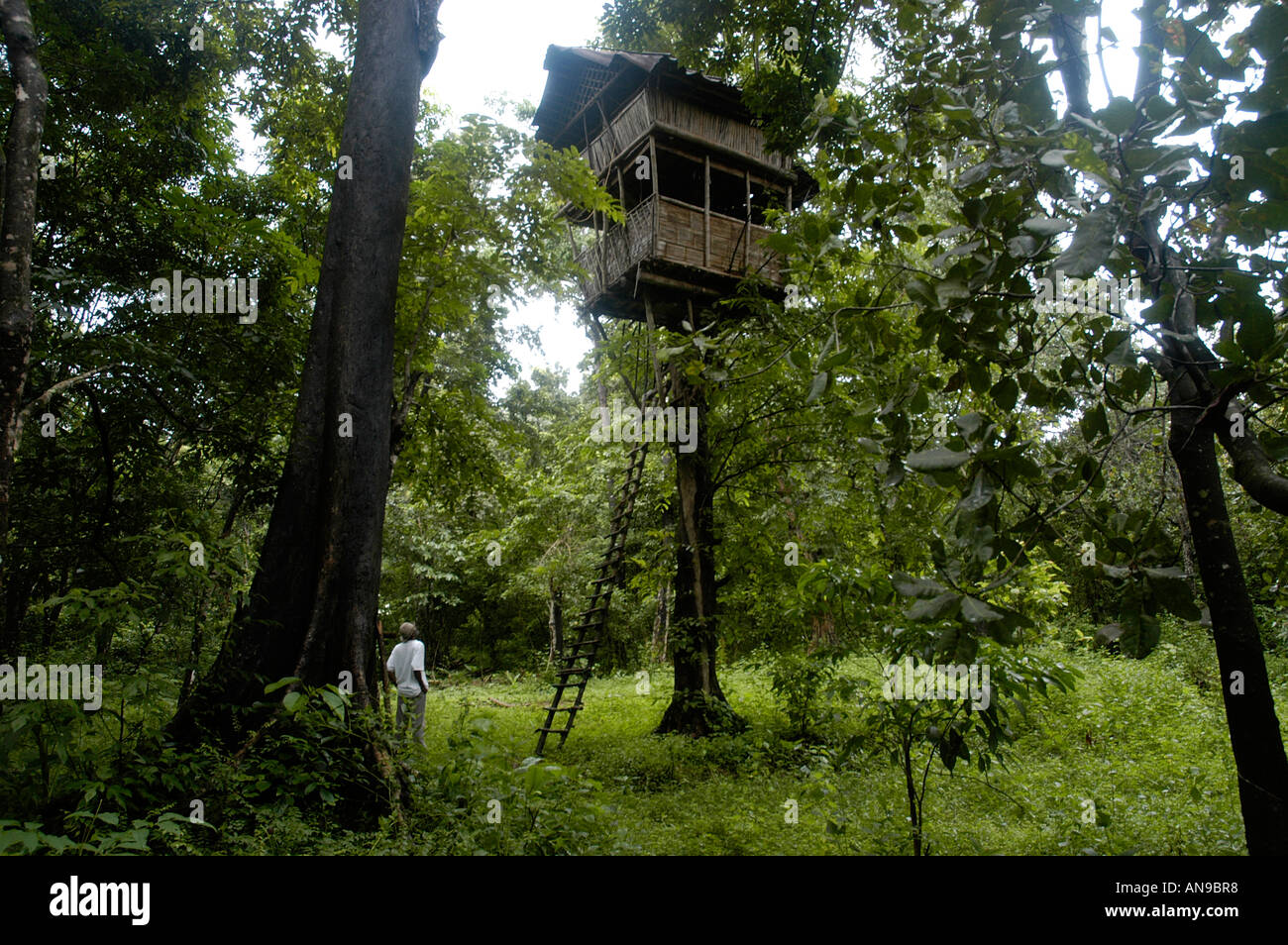 Tree Top House Thattekad Bird Sanctuary Ernakulam Dist