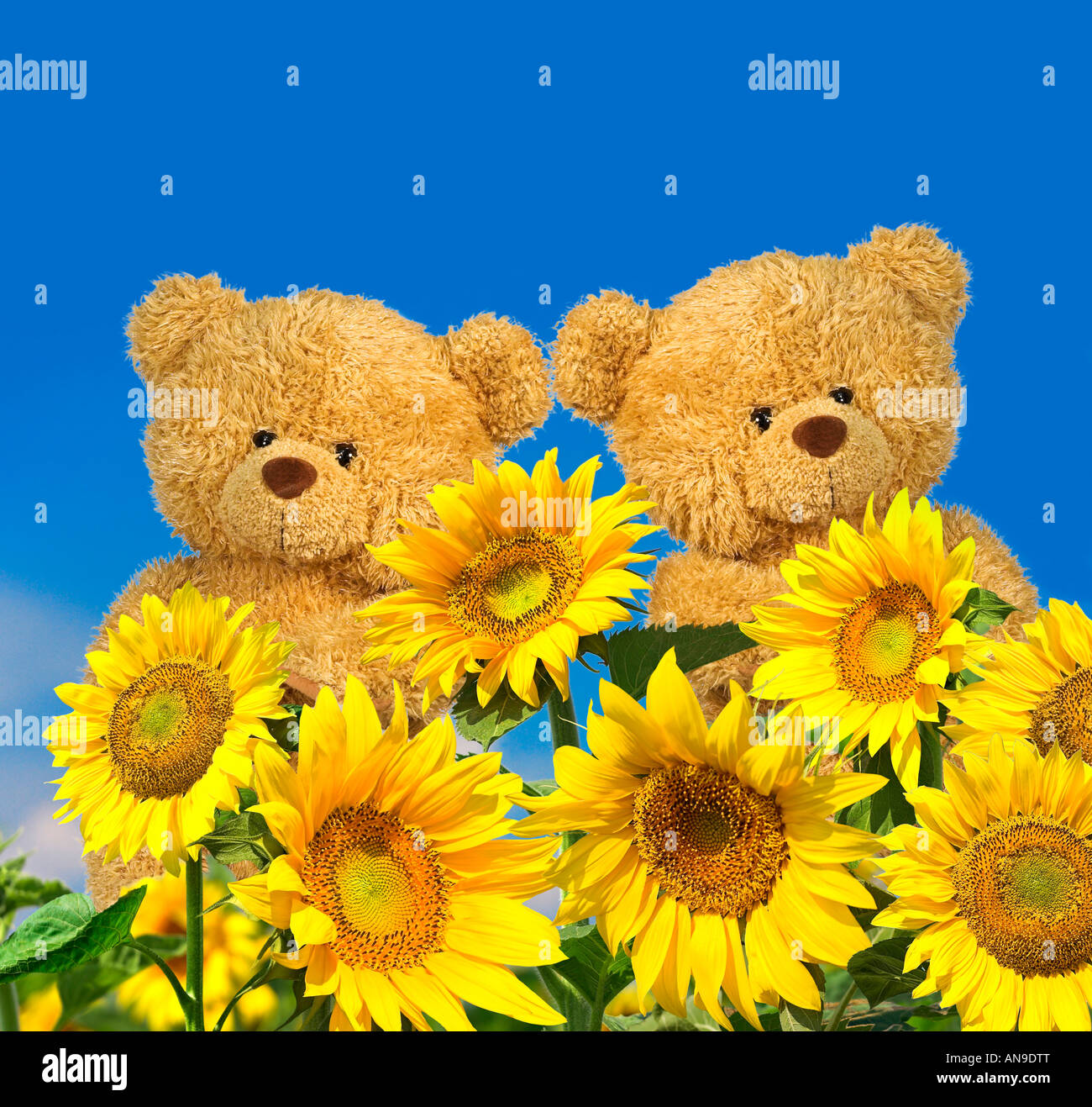 teddy bears with sunflowers stock photo royalty free image