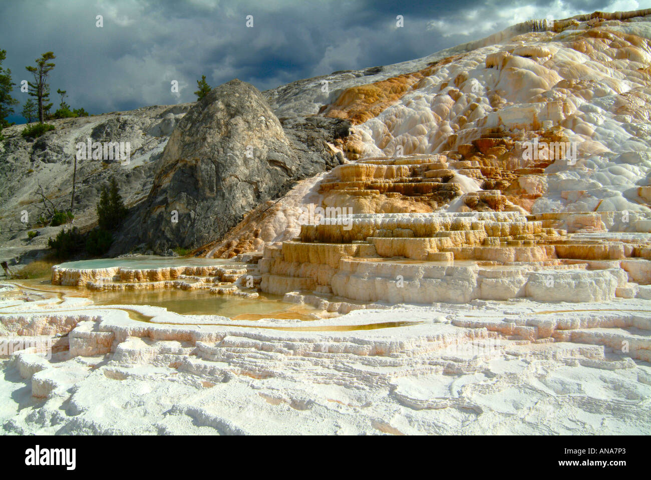 Part of minerva terrace mammoth hot springs at yellowstone for Minerva terrace yellowstone