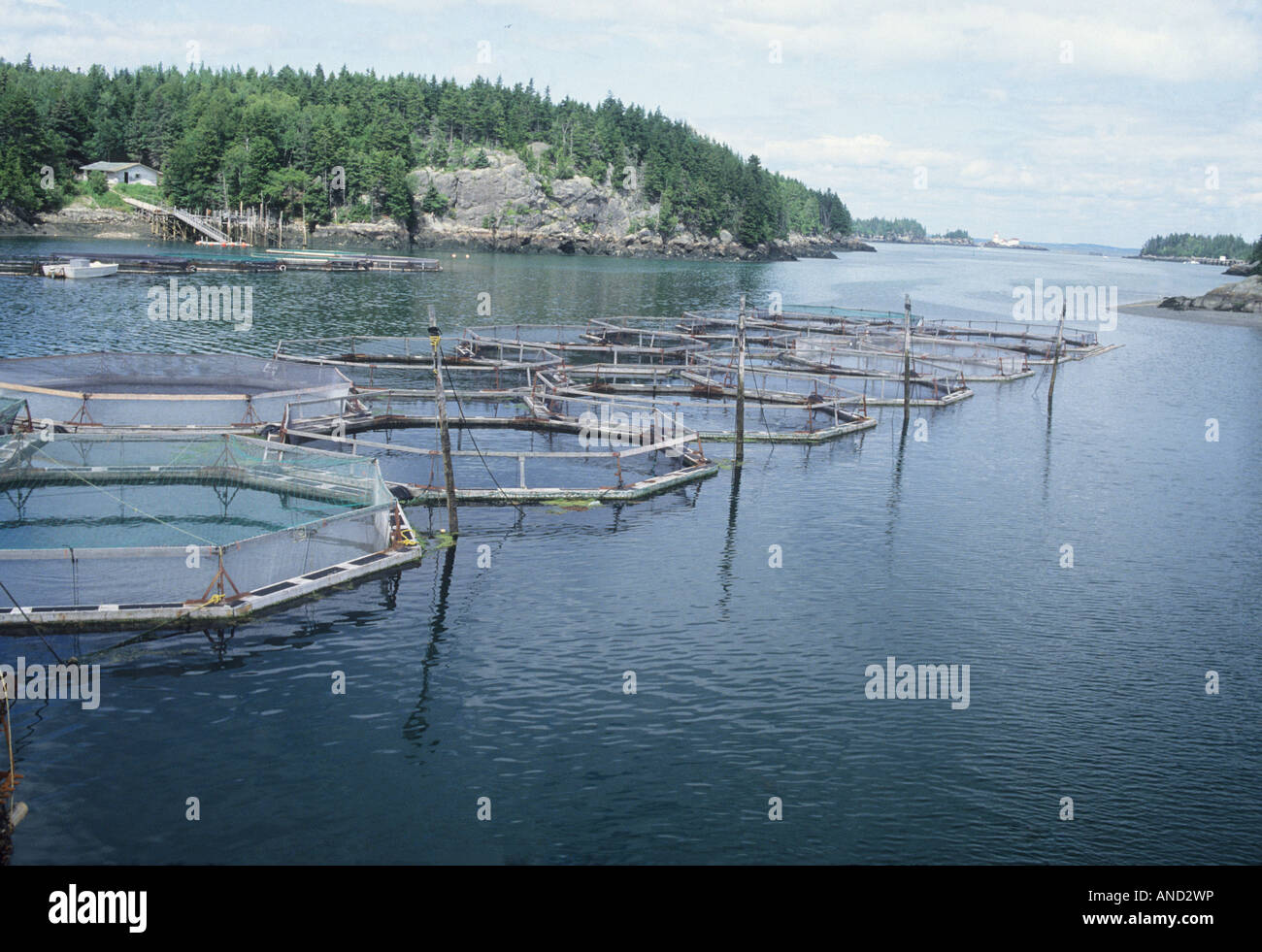 Saltwater salmon pens lubec maine usa atlantic ocean food for Saltwater fish pond