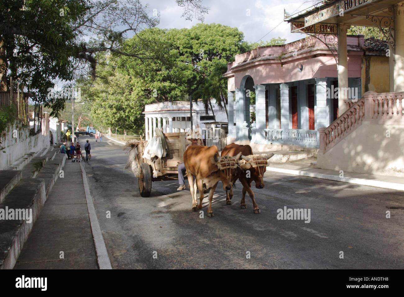 oxen cart outside hotel saratoga san diego de los baos cuba stock photo