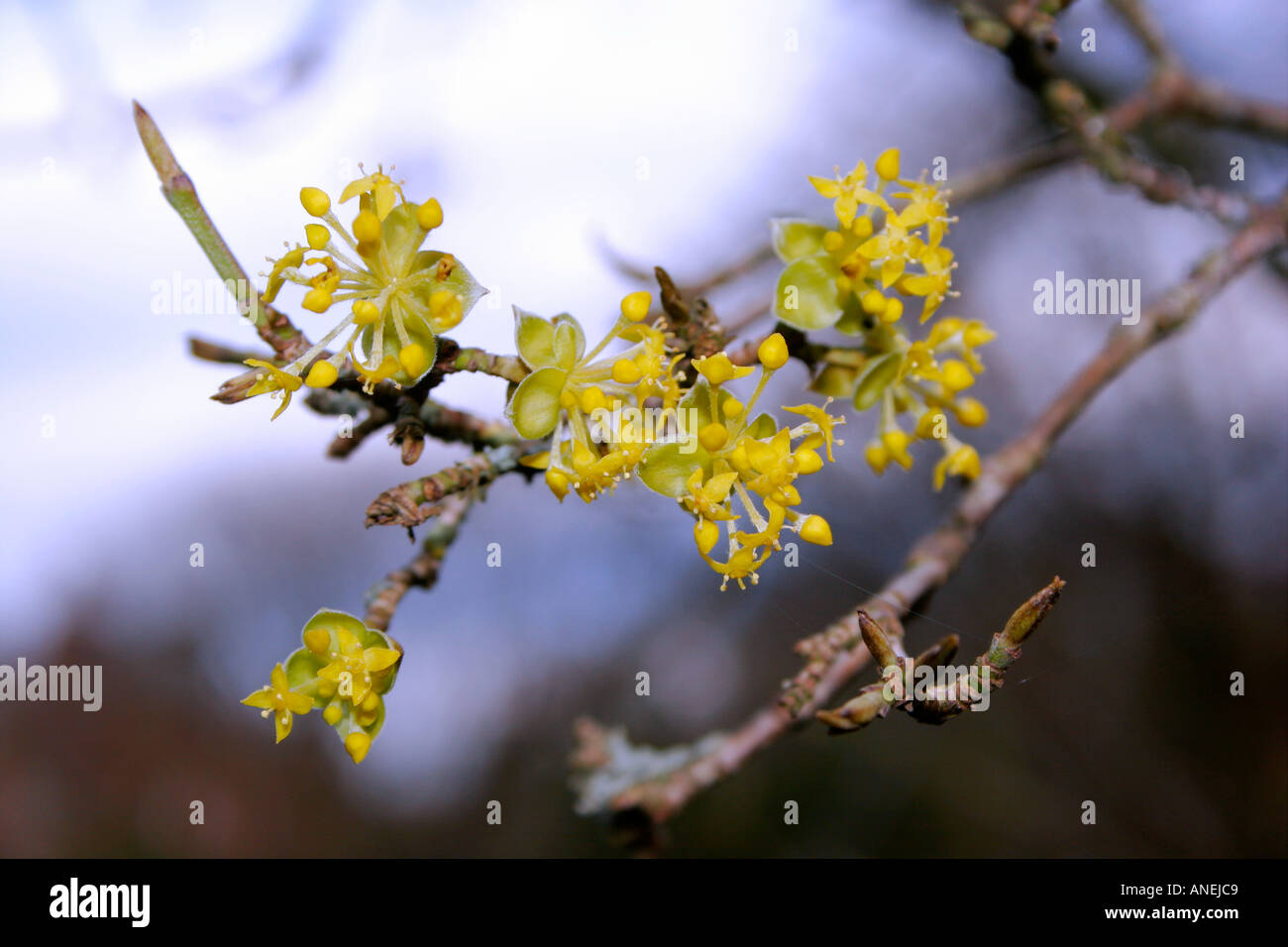 Names Of Spring Flowers With Pictures Gallery Fresh Lotus Flowers