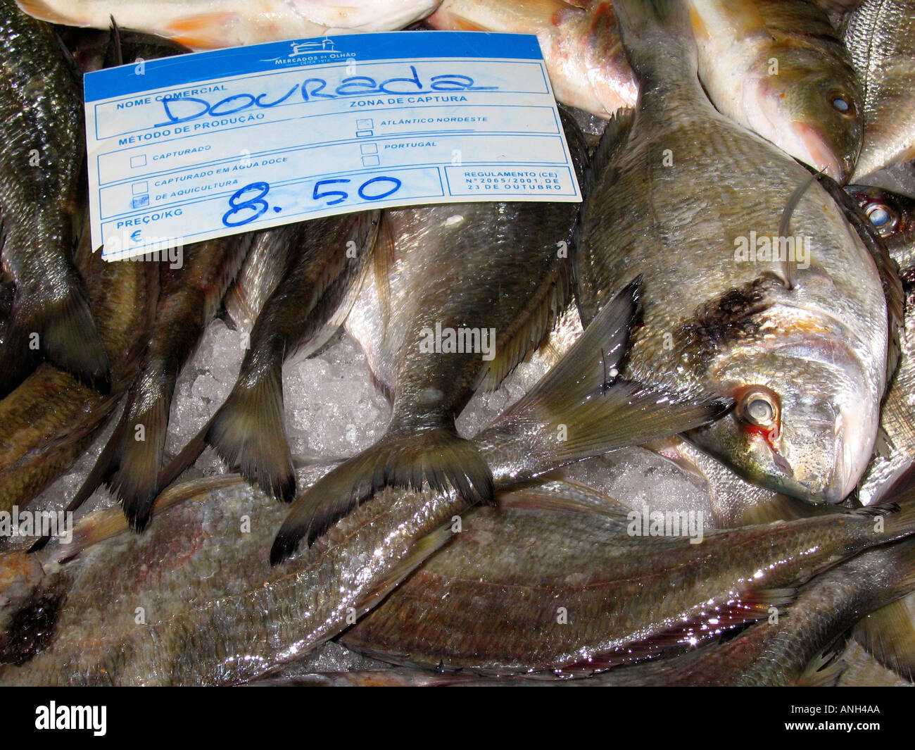 Dourada fish for sale in olhao fish market algarve for Stock fish for sale