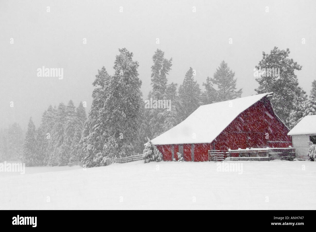 A Red Barn In A Snow Storm Northern California Stock Photo