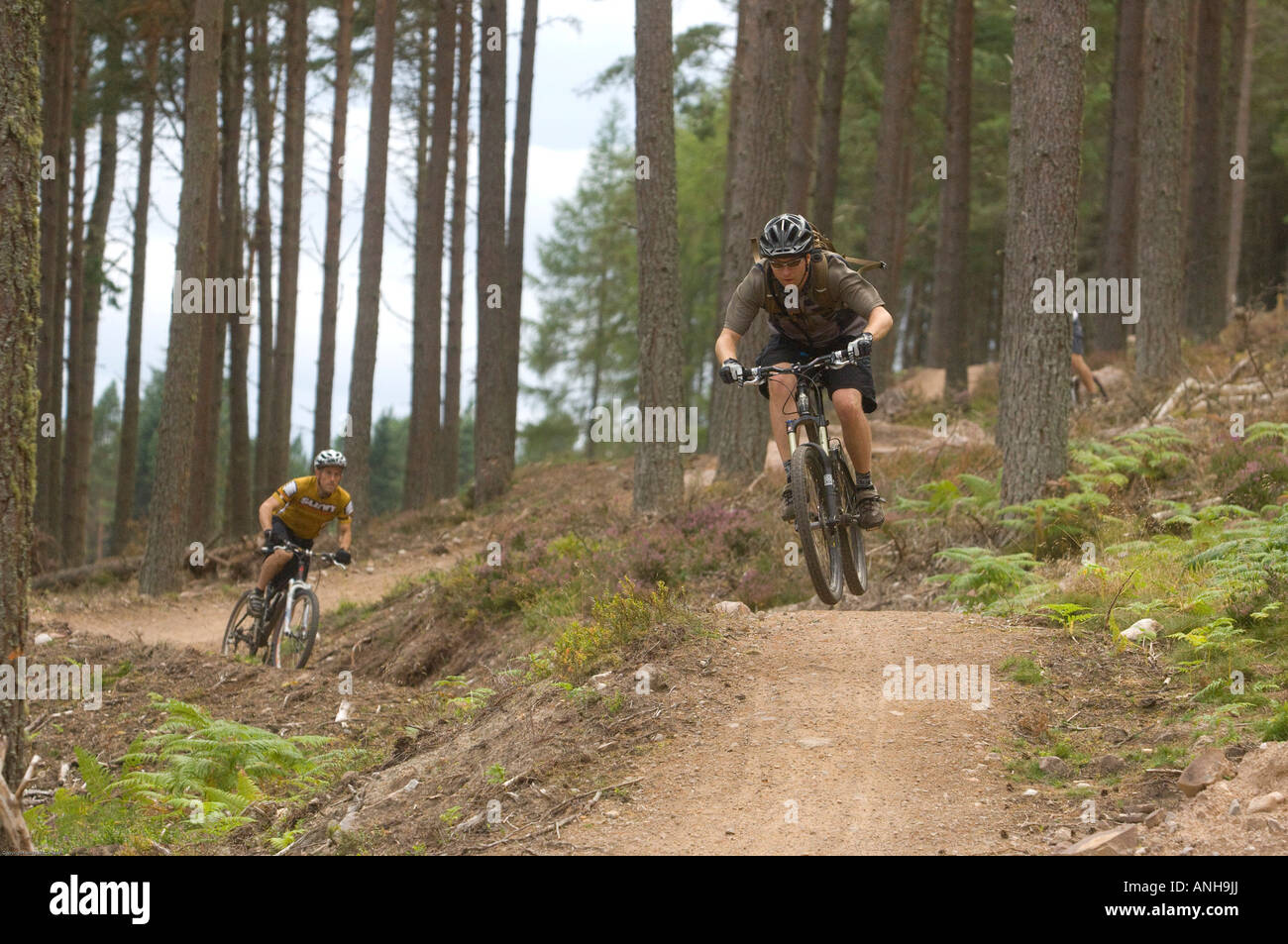 Riders Mountain Bike The Man Made Trails In Golspie North East