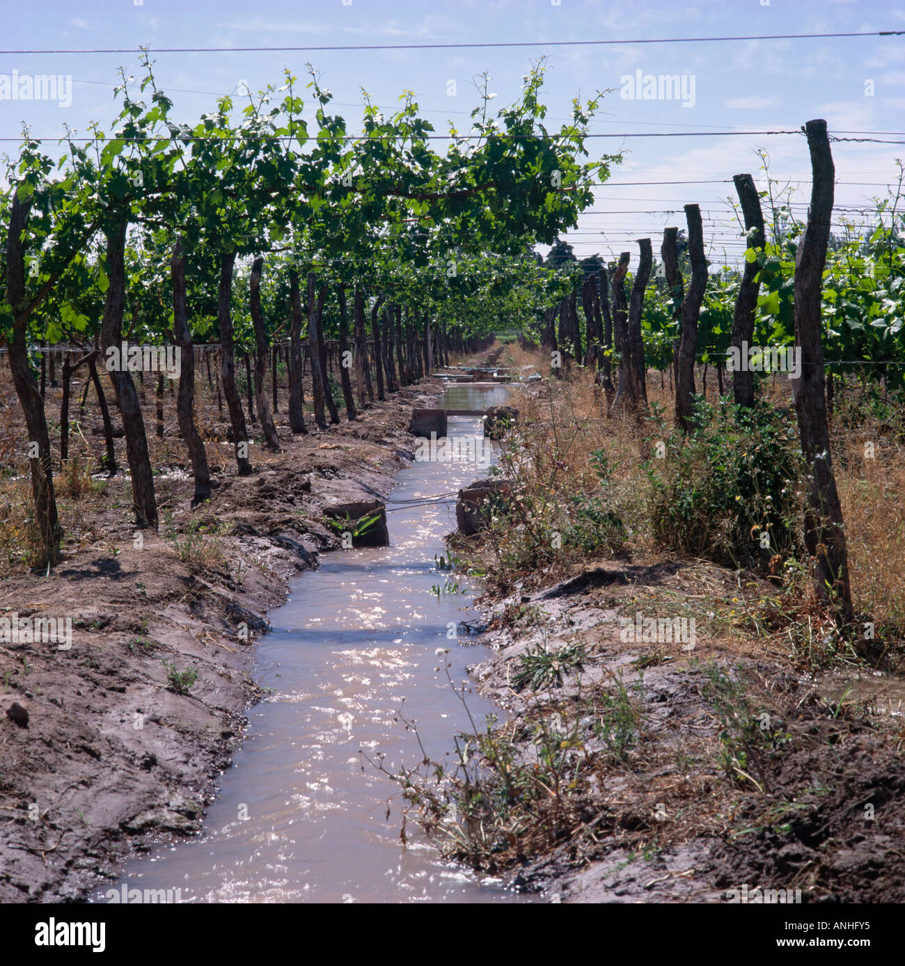 irrigation channel in vineyard of bodegas trapiche owned by pe aflor stock photo royalty free. Black Bedroom Furniture Sets. Home Design Ideas