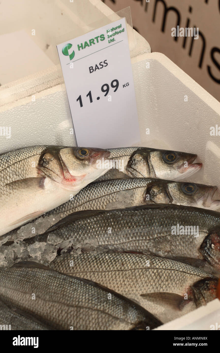 sea bass fresh fish for sale at market with ice and price