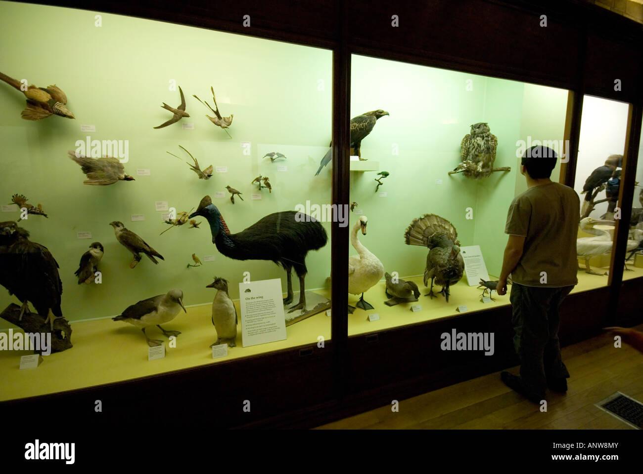 Santa Barbara Museum Of Natural History Free Day