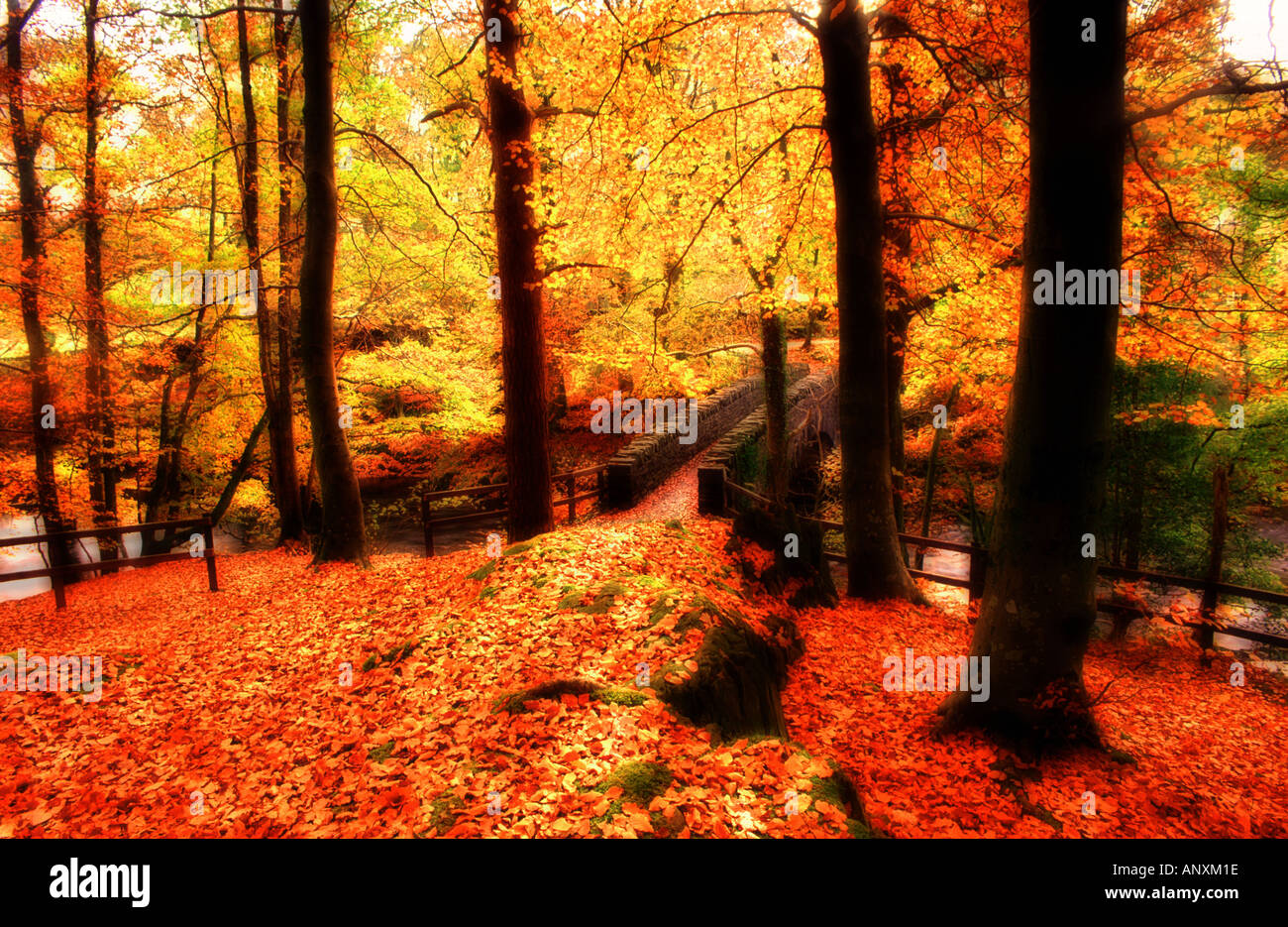 trees in forest autumn fall time golden brown yellow carpet of
