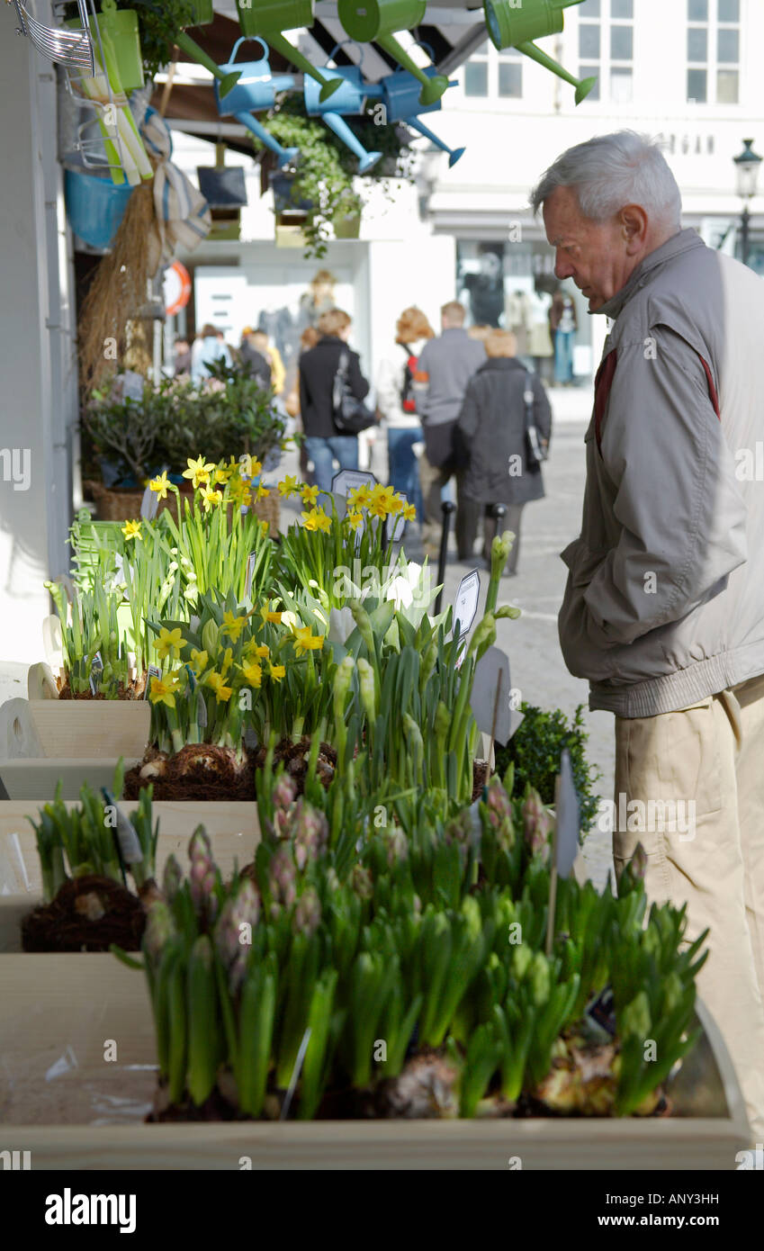 Belgium bruges a shopper inspects spring flowering bulbs narcissi a shopper inspects spring flowering bulbs narcissi and tulips for sale in one of the central streets mightylinksfo