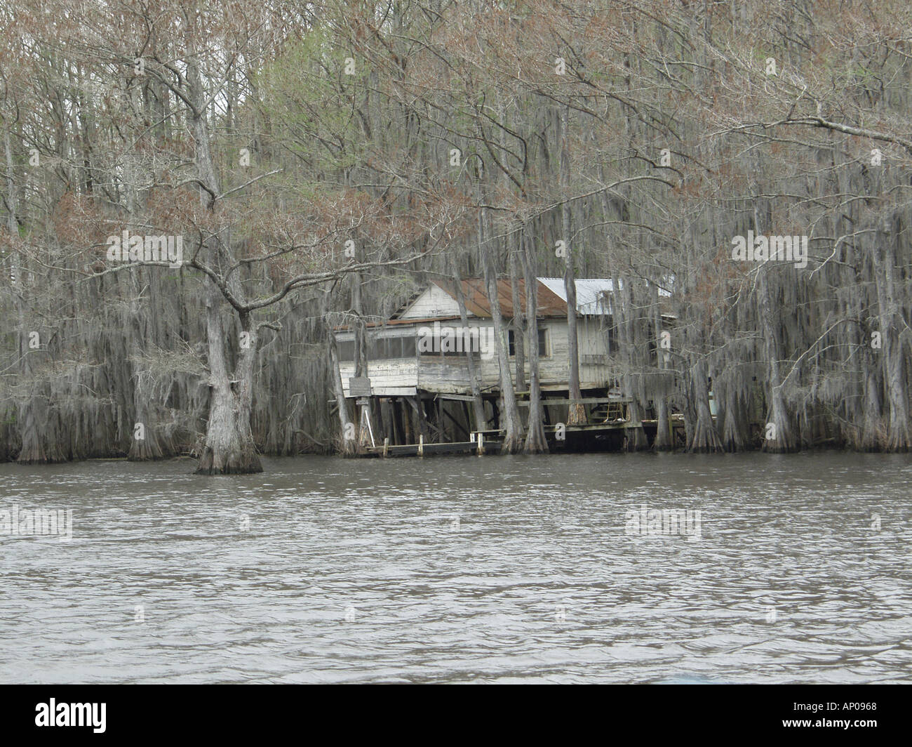 Old Fishing Cabin On The Shoreline Of Scenic Caddo Lake This Is The Only  Natural Lake In Texas