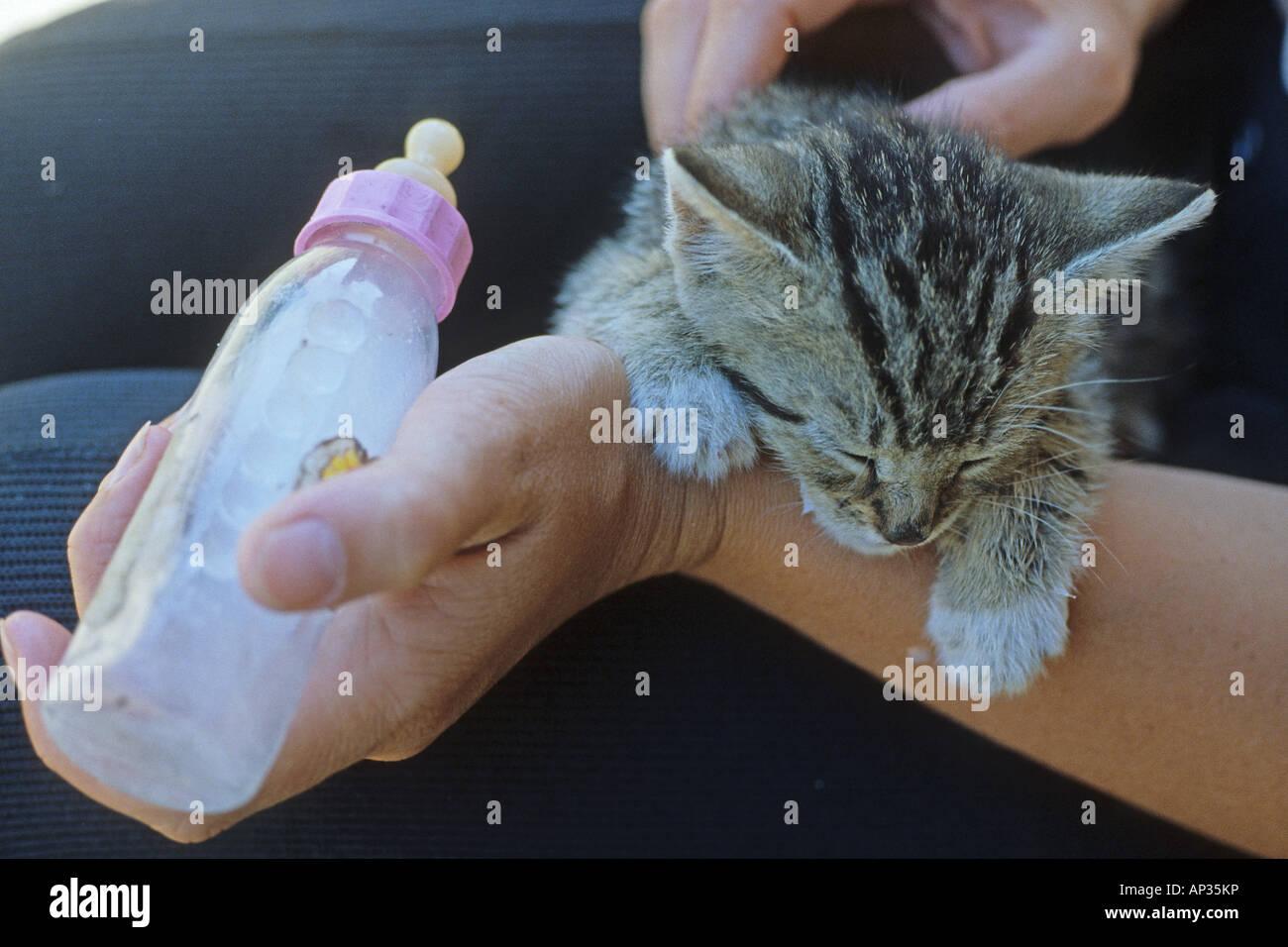 bottle feeding a kitten hand feeding hand raising kitten