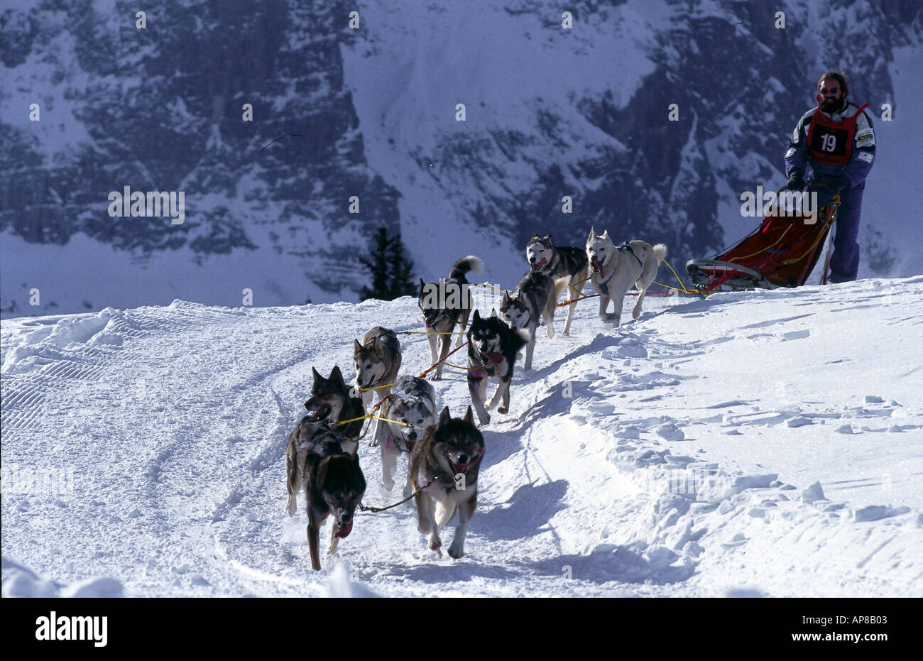 Person being pulled by husky on sledge Stock Photo ...