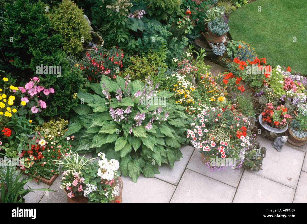 Hostas And Colourful Summer Flowering Annuals In Pots On Patio