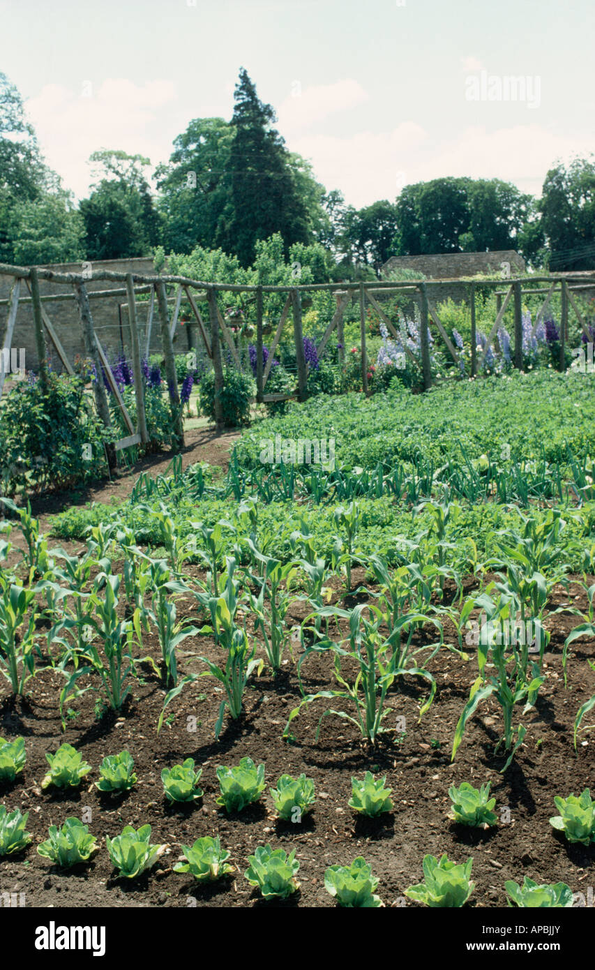 Country vegetable gardens - Stock Photo Vegetables In Rows In Country Vegetable Garden With Rustic Wooden Poles