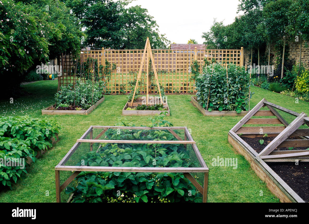 Contemporary Domestic Fruit And Vegetable Garden